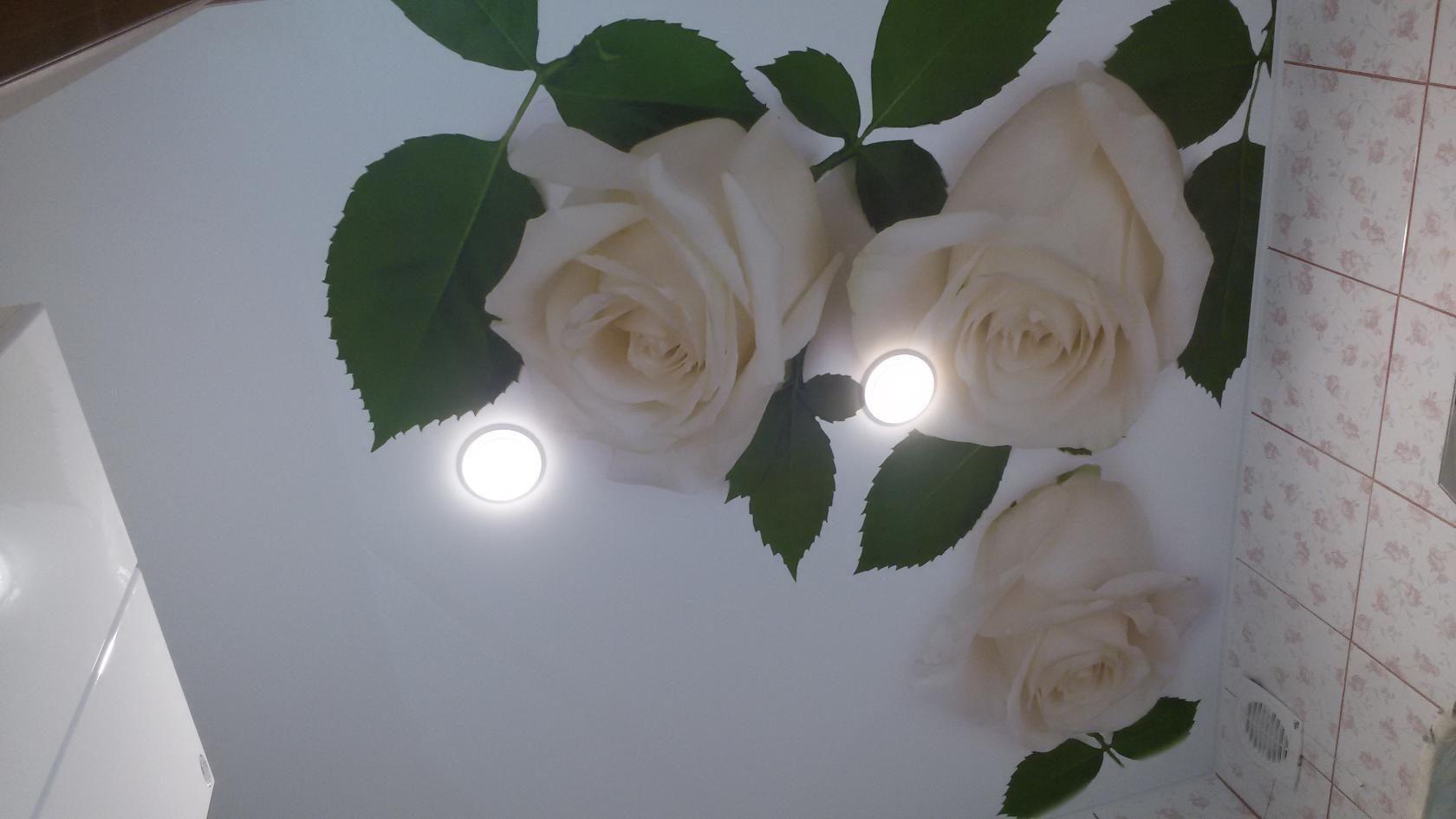 прыщик натяжные потолки с розами фото сказанные